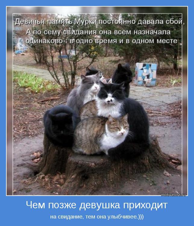 Смешные фото кошки животные